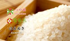 新米をお届け!お米農家直送   雪若丸・つや姫・はえぬき  -特別栽培米-のセールをチェック