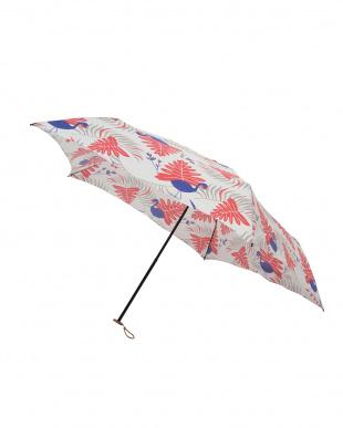 サファリ コラール 軽量折りたたみ傘(デザイン)を見る