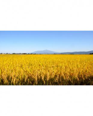 化学肥料ゼロ 特別栽培米 山形産はえぬき5kg×2袋(計10kg)/送料込見る