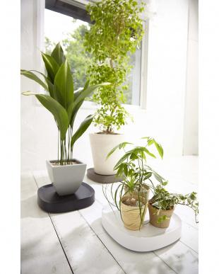 ホワイト Plantable キャスター付き植木鉢トレーを見る