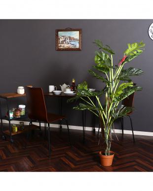 観葉植物 スプリット 22を見る
