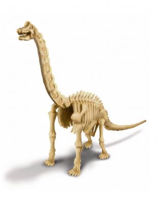 発掘&組立 ブラキオサウルスを見る